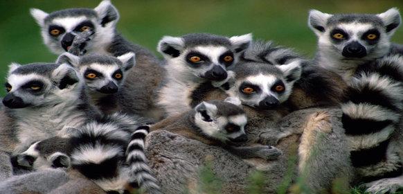 Upptäck Madagaskar – ett bortglömt paradis