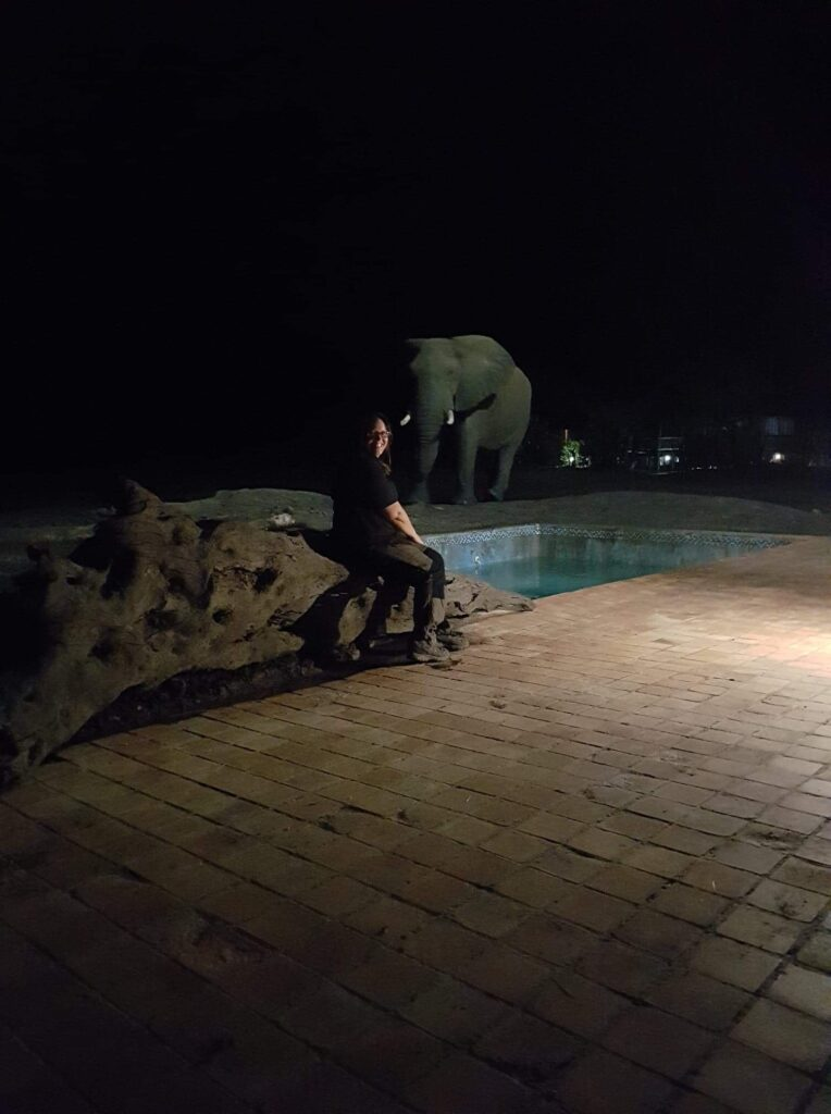 Eelefant Zimbabwe