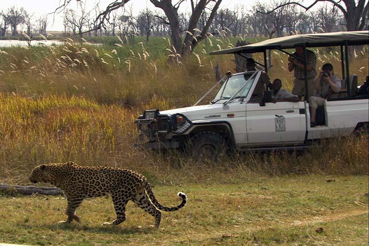 Okavango Moremi Game Reserve