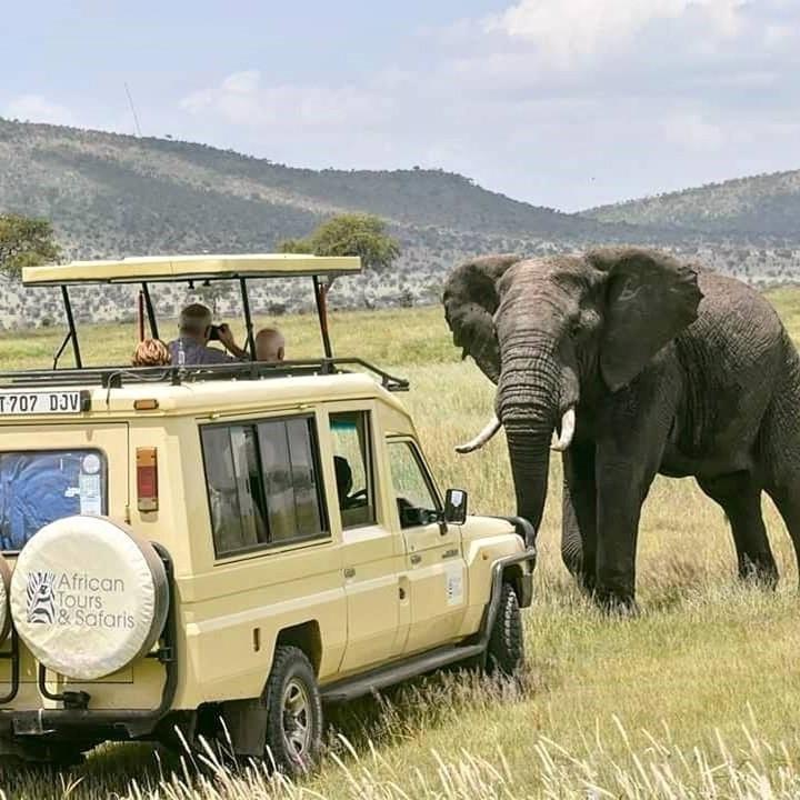 African Tours & Safaris jeep och en elefant