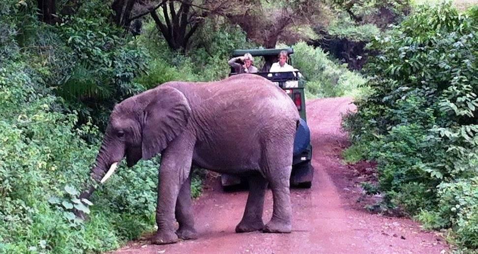 elefant vid jeep i lake manyara