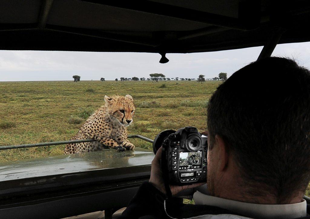 Nyfiken gepard