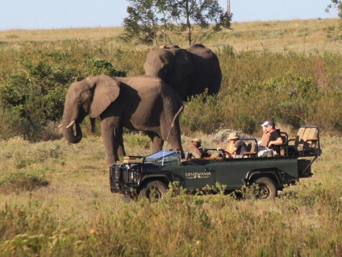 Elefanter i Gondwana private reserve i Sydafrika